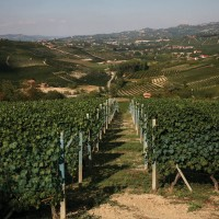 Azienda Agricola Brezza - Photogallery